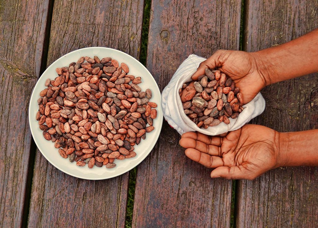 Crio Bru is made from cacao, and you should be paying attention to its benefits