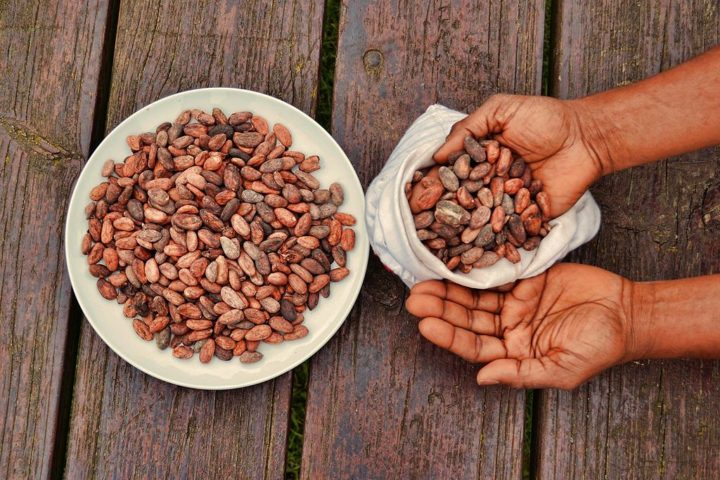 cacao_beans